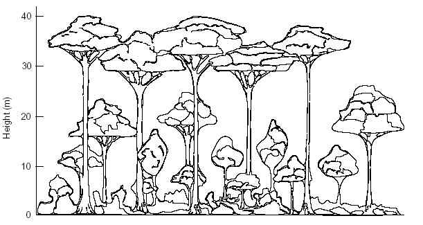 Layers Rainforest Trees Coloring Pages Sketch Coloring Page Rainforest Layers Coloring Page