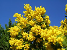 Mimosen