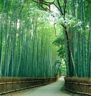 http://1.bp.blogspot.com/_dv_ogUtylsQ/TK6Ehq-YffI/AAAAAAAAASY/541e19FMo9U/s400/bambu.jpg