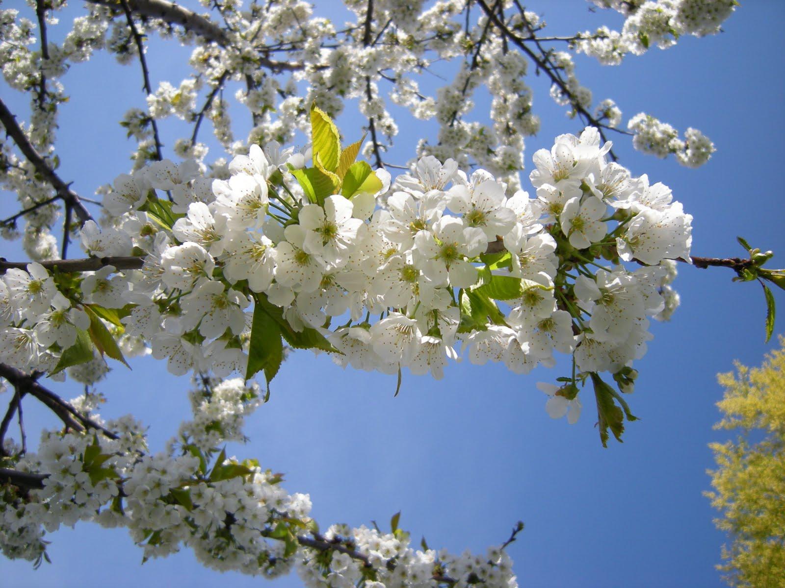 plantas de baixo custo dão flores durante todo o verão e agradecem