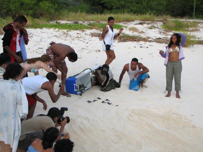 Adebio-Liberacion de Tortugas Marinas (2008)