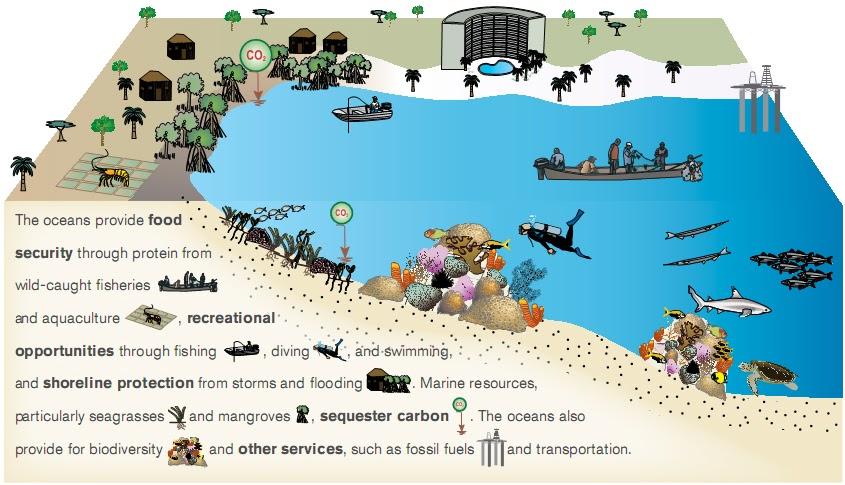 Blue Carbon Blog  Carbon Sequestration As A Marine