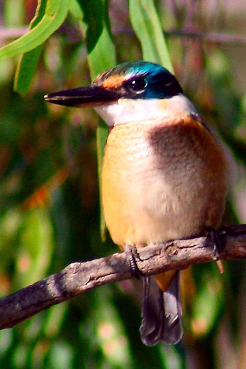 [kingfisher1.jpg]