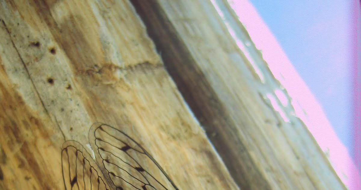 tonnelle de jardin en bois