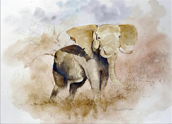 Dieter Demattio Aquarelle Elefantenbulle