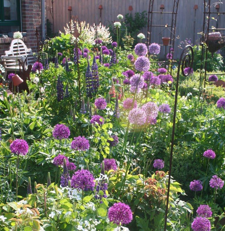 Giardinaggio allium - Bulbi estivi quando piantarli ...
