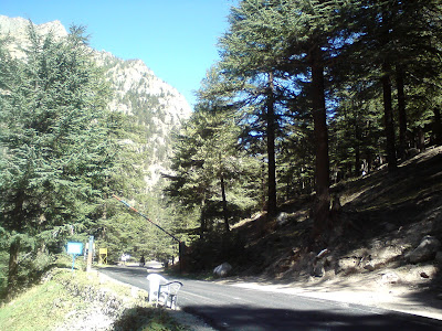 Bhaironghati - lovely forested area, covered by deodhar 
