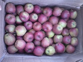 Apples at Harsil near Gangotri