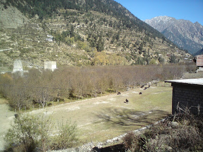 Apple orchards at Harsil - Enroute to Gangotri