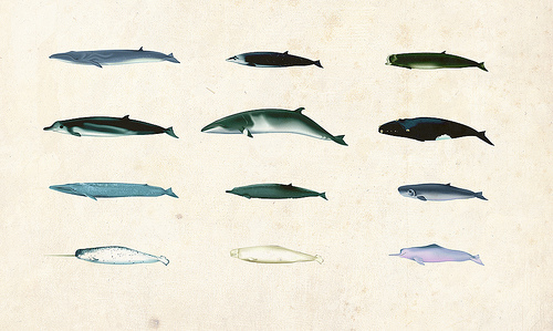 Different Types Of Whales
