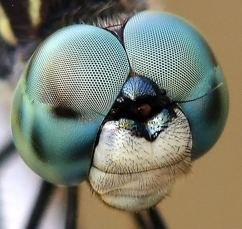 Fifty Two Pieces: Fly Eye and the Amazing Hexagonal Mirror Fly Eyes