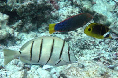 Convict Tang Wiki Here is a Convict Tang Aka