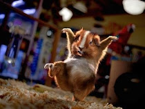 kung fu panda? Kung fu hamsters are where its at!