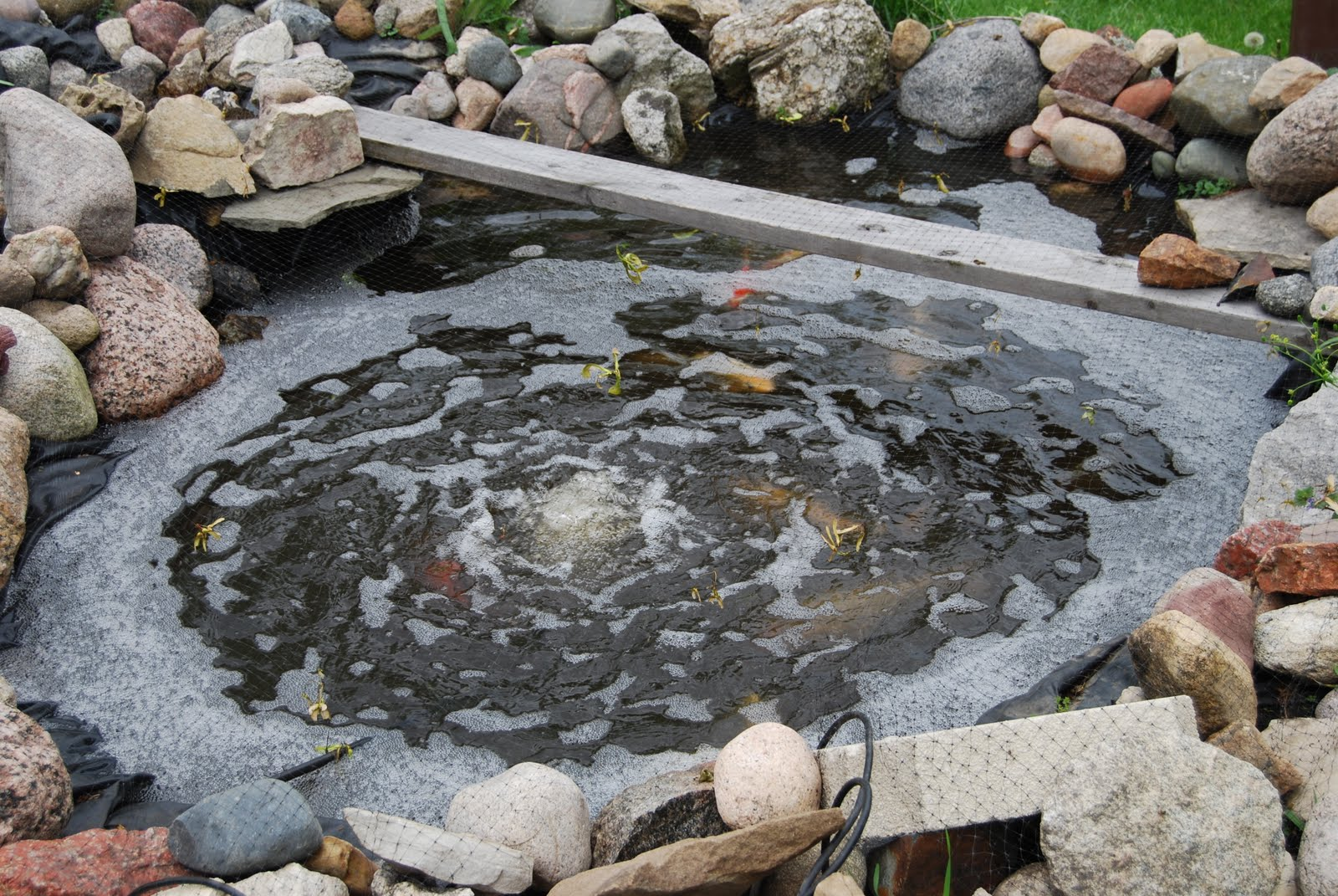 Musings of the sixties spring cleaning koi pond style for Koi pond cleaning