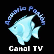 Acuario Pasión TV