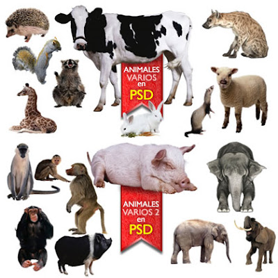 if u were an animal what would you be