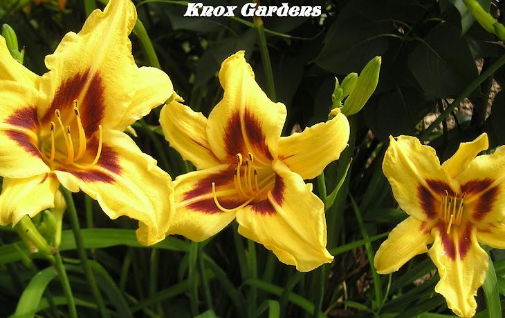 Knox Gardens