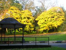 Barnes Park