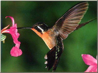 Humming bird picture