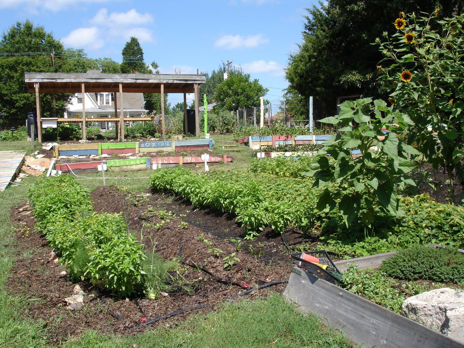 seeds u0026 dig community gardens durham nc