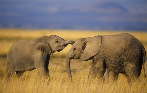 The African Grassland