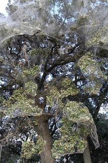monster spider web