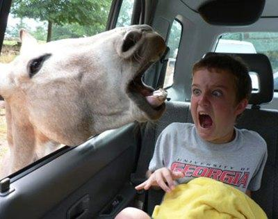funny kids and animals