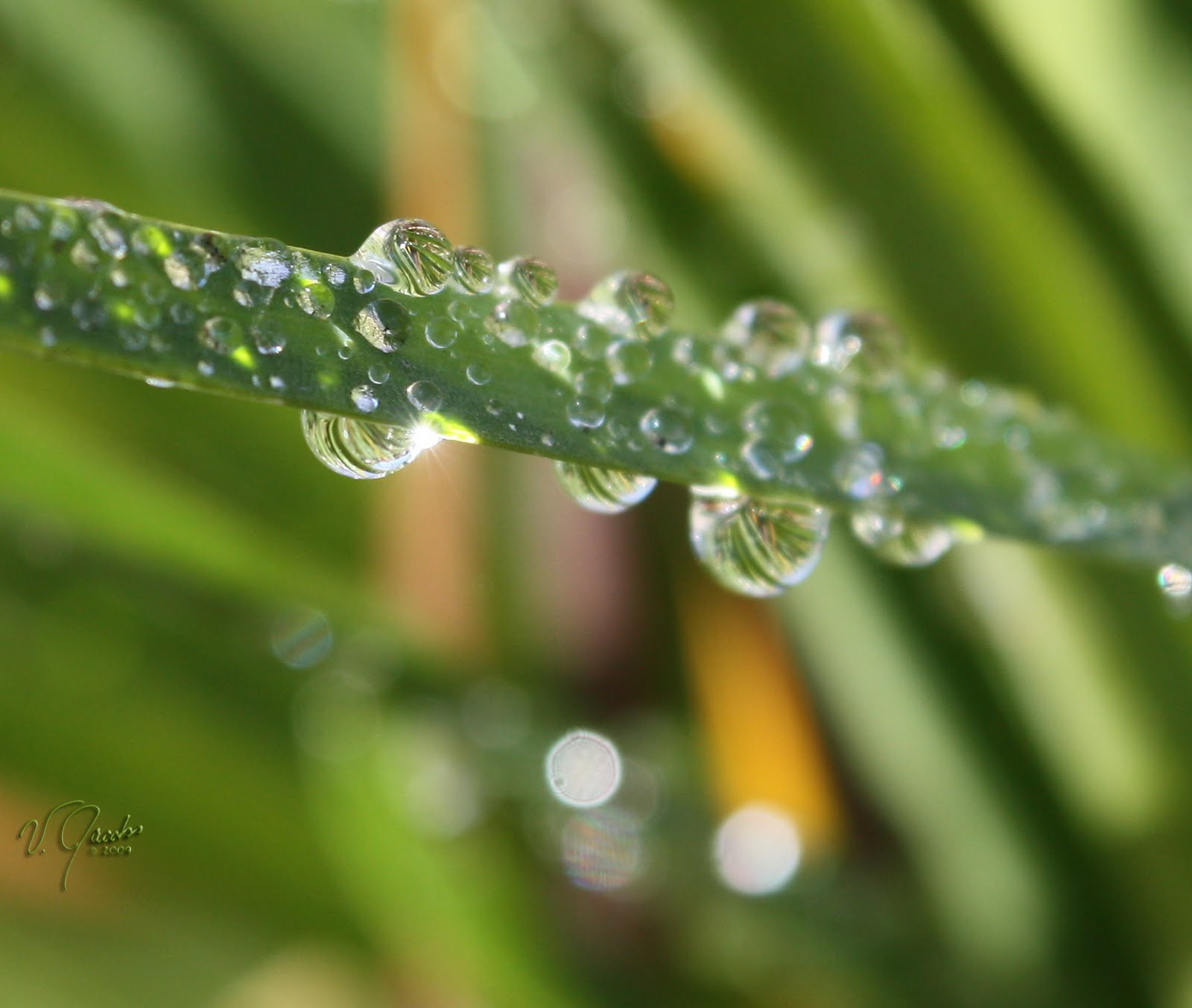 [dew+on+leaf]
