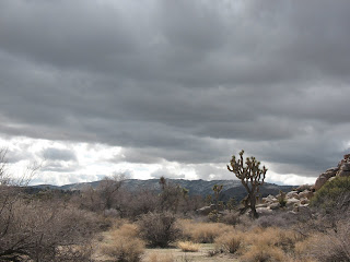 Joshua Tree Clouds