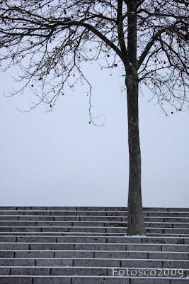 Un arbre dans l'escalier