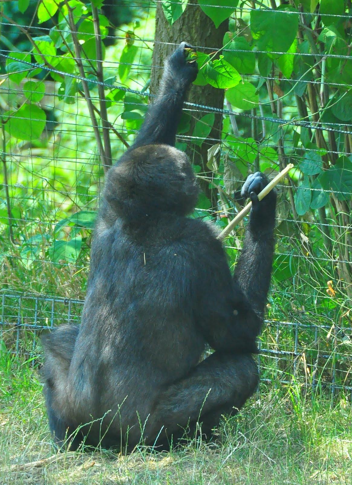 Praten met dierentuindieren: juli 2010