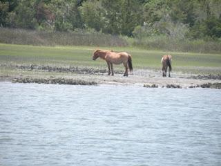 Beaufort's Ponies