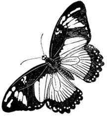 Sketches of nature Black and white butterfly wallpapers