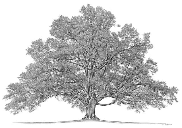What does your family tree look like?