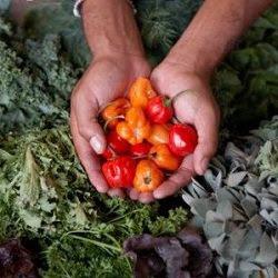 Producción, alimentación orgánica y medio ambiente