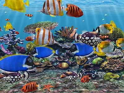 ... ikan, mudah/sulitnya perawatan, dan temperamennya t