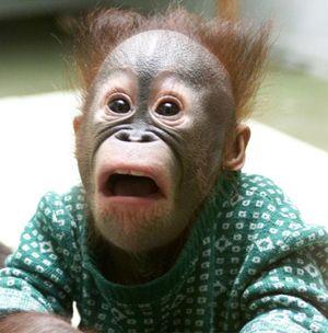 Monkey+Shocked.png