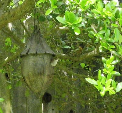 Wren in Acorn House