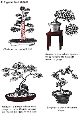أشكال وتصميمات البونساي