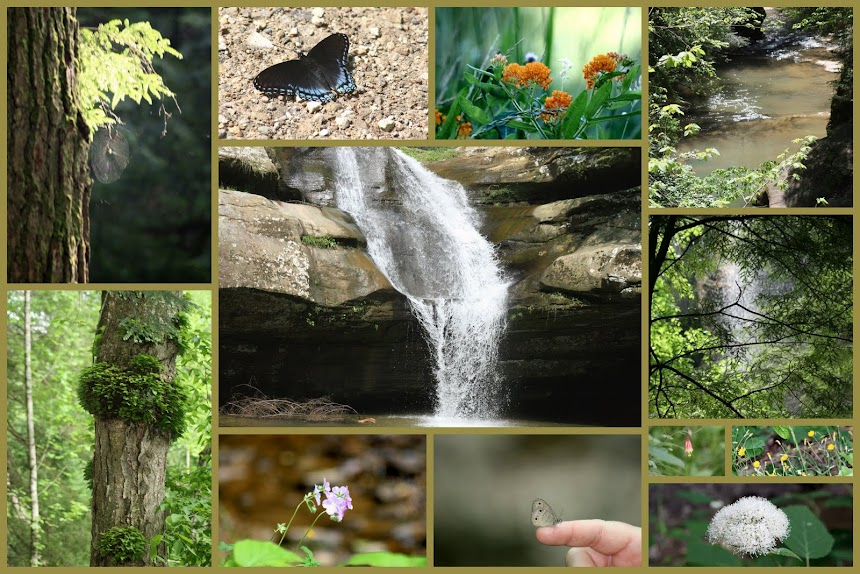 Nature's Scenic View