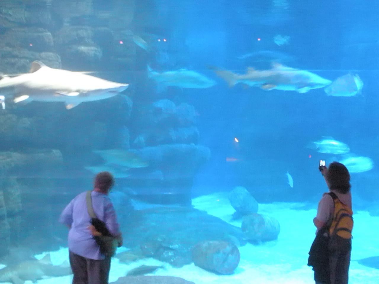 Merle 39 S Whirls Virginia Beach Aquarium