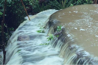 sitio+floripa+037 Reduto ecológico em risco em Florianópolis