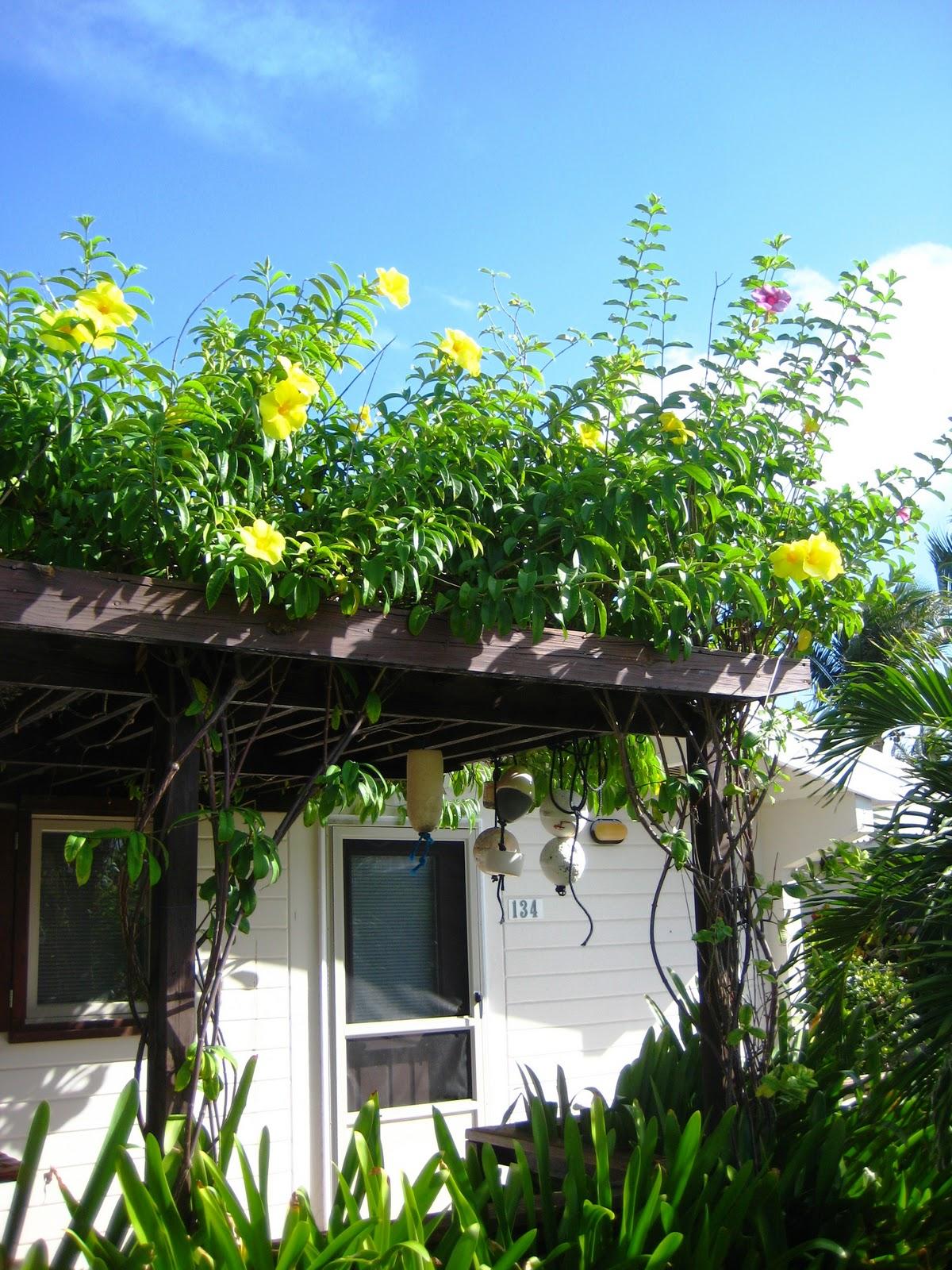 Long Island 39 S Garden Girl Take Home The Tropics