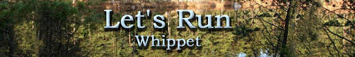 Let's Run Whippet