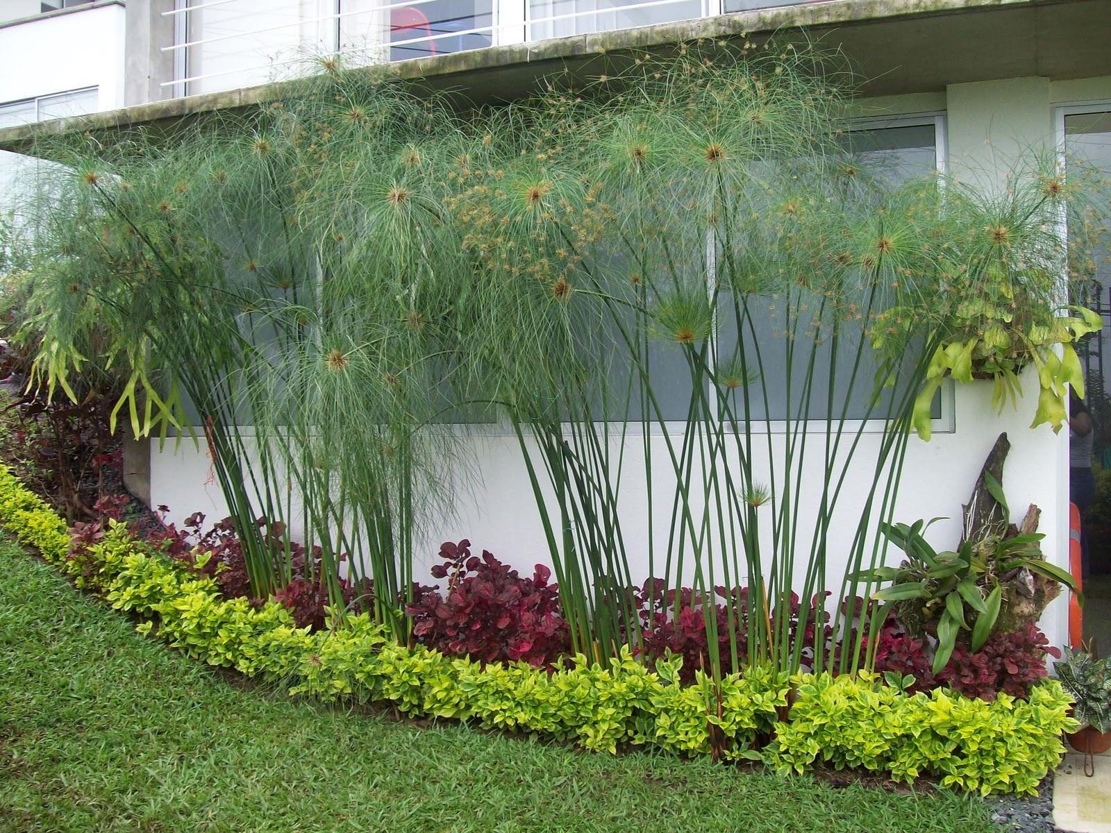 Vivero don juan jardines para fincas for Jardines en casas pequenas fotos