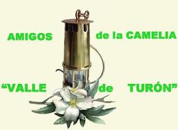 Amigos de la Camelia Valle de Turón. Asturias.