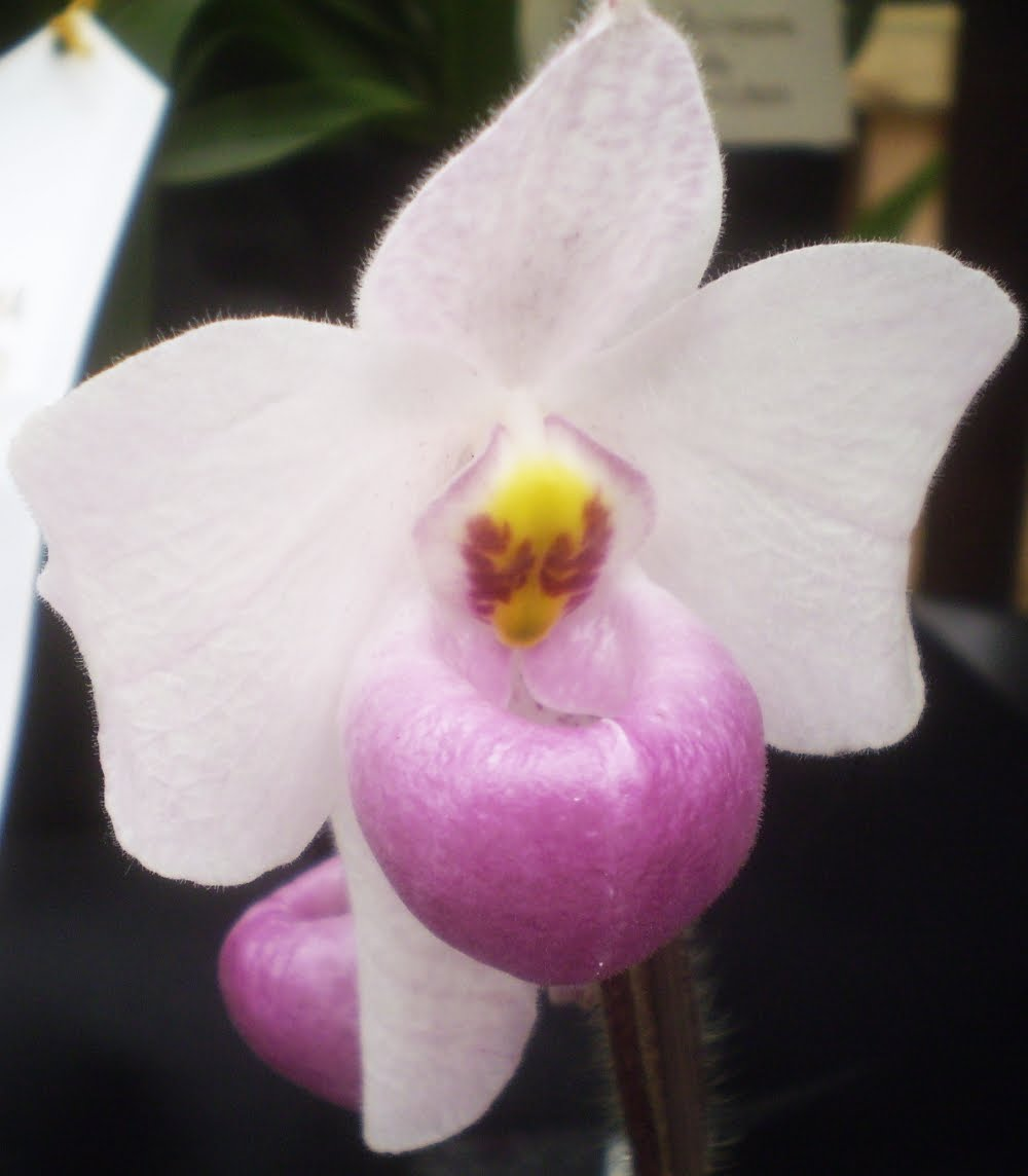 Different Types of Orchids and Their Names