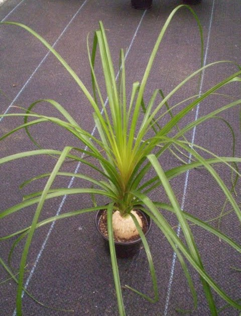 Plants are the strangest people list houseplants that for Tall narrow house plants
