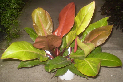 Plants are the Strangest People: List: Houseplants With ...