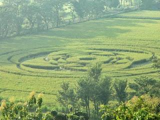 crop-circles-sleman2